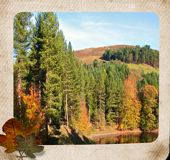 Herbstfoto 15_bearbeitet-4-1