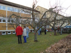 obstbaum12-1