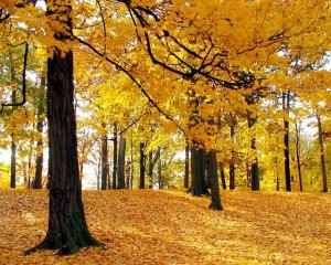Herbstfoto 6-h